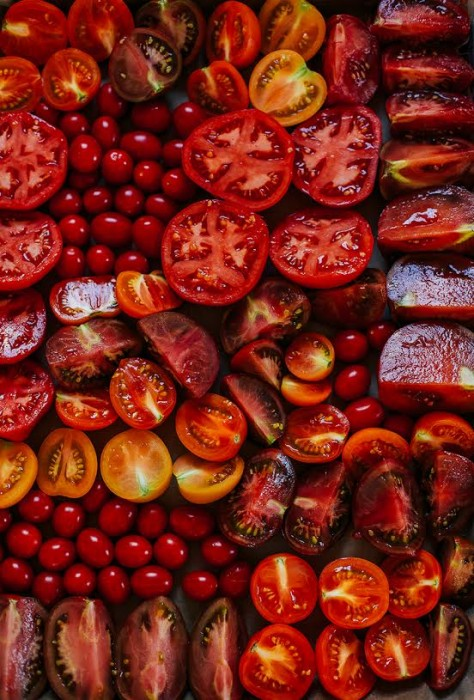 laura wright tomatoes