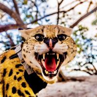 Stryker The Cat Social Media Influencer Bio on Socialix